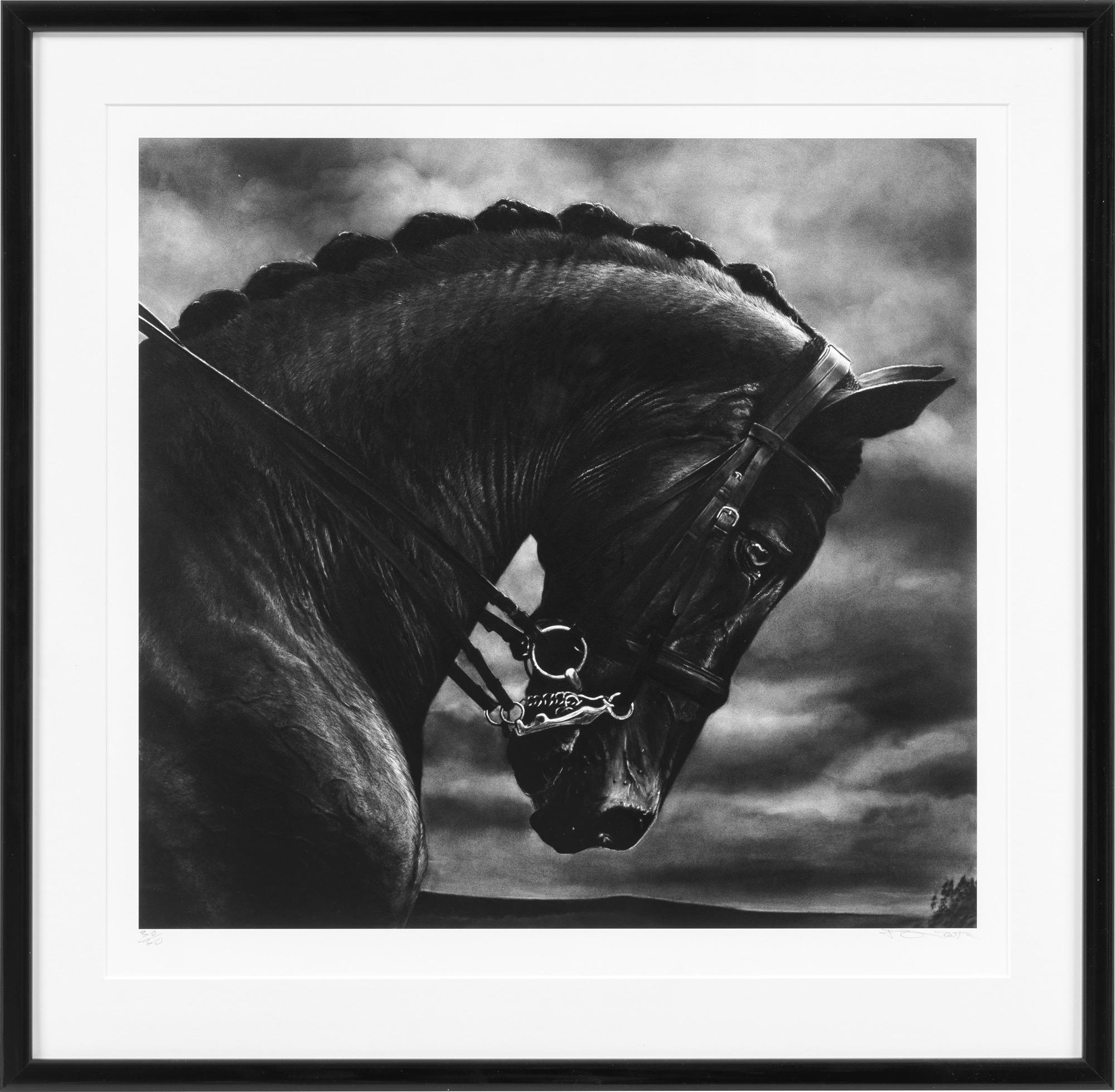 """Bild """"Bucephalus"""" (2017)"""